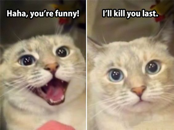 Top 25 Very Funny Memes