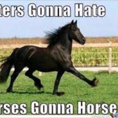 Top 27 Funny Horse Memes